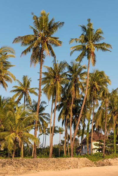 Palm Trees, Ngapali Beach