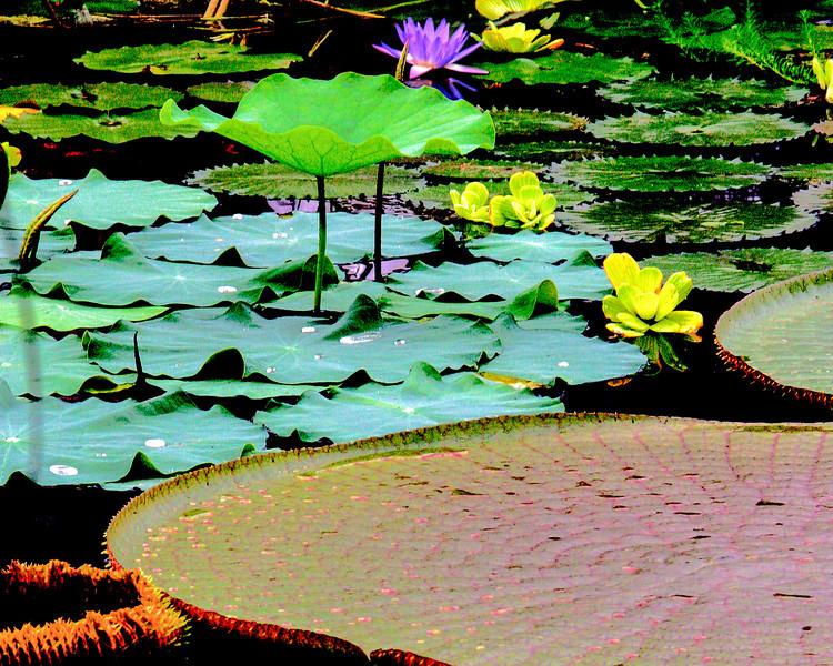 Solarized Pond.jpg