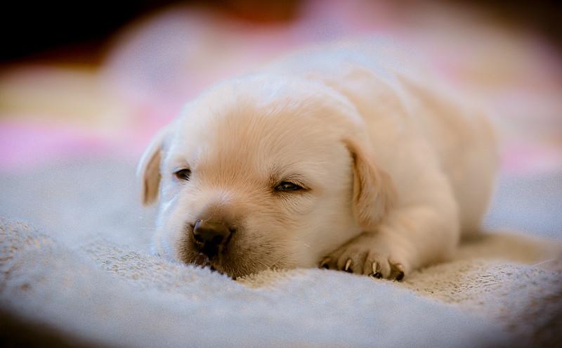 puppycuteness-135.jpg