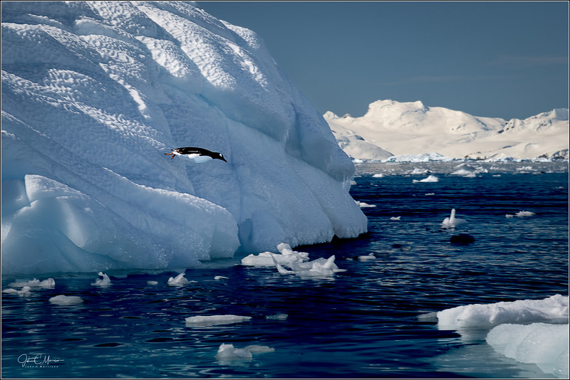 JZ7_8417 Iceberg Flying Penguin LPTW.jpg