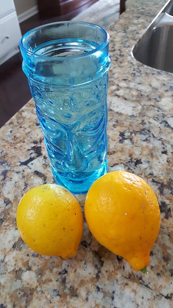 Carol and Gary's Florida Citrus March 18 2017