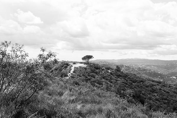 The Wisdom Tree Hike - Los Angeles 3.1.15