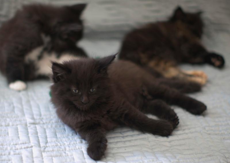 Kittens309.jpg