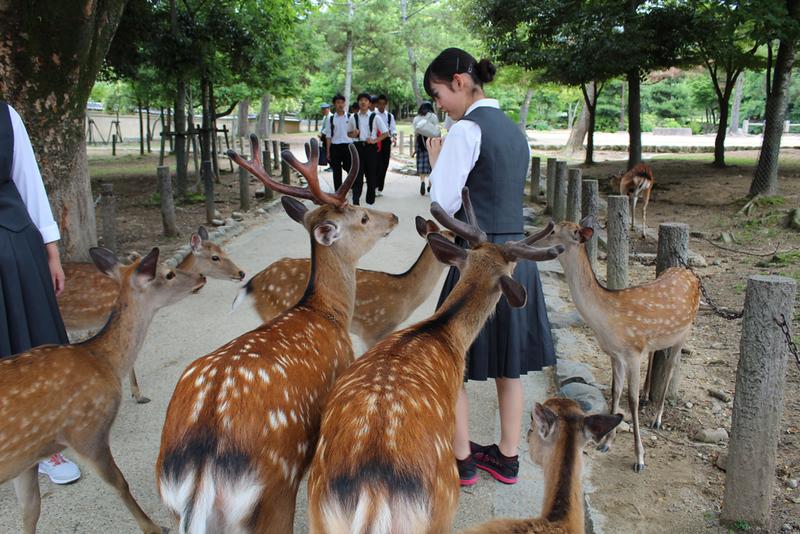 Nara Park. Editorial credit: Sirlene Andreis / Shutterstock.com