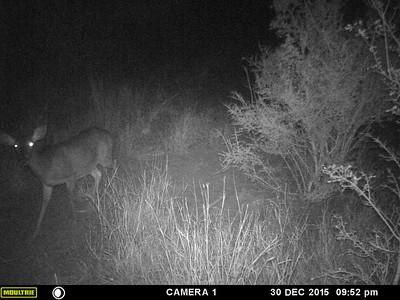 deer lease Dec 2015