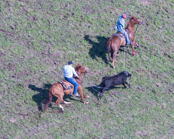 Mike White Pasture Roping from the air above