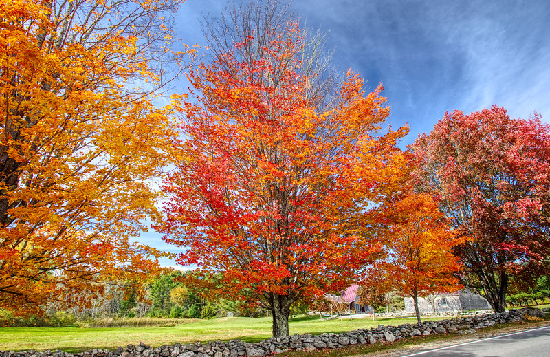 Stonewall and Maples in Autumn. Boothbay, Maine.jpg
