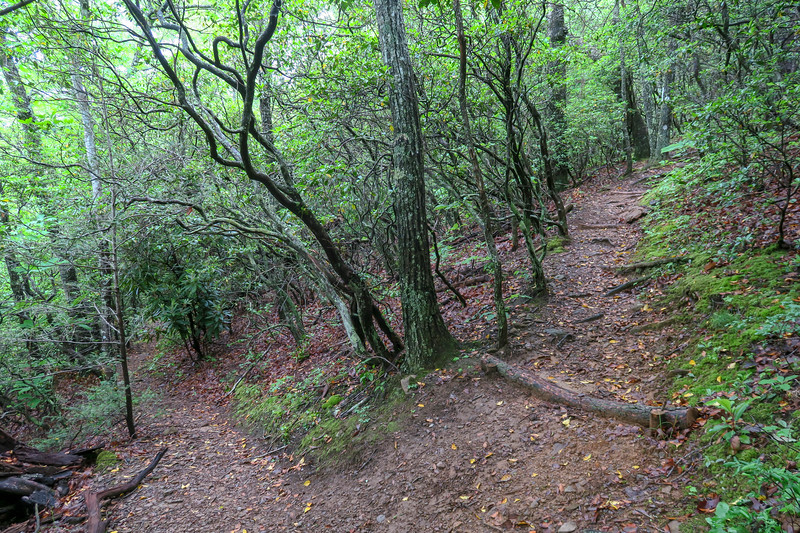 Chestnut Cove Connector Path/Mountains-to-Sea Trail Junction -- 2,970'