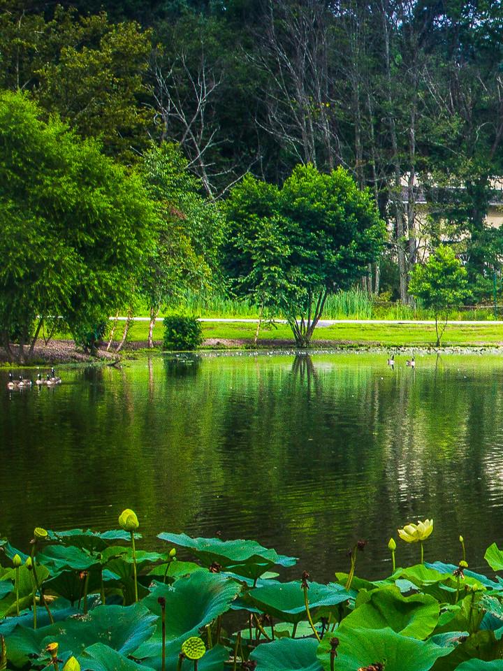 滨州Willows park,享受自然