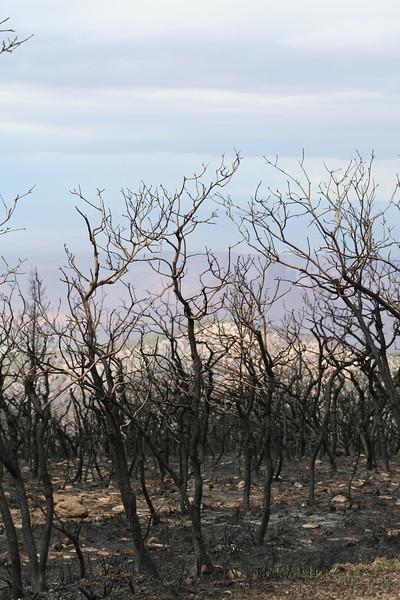 20080909-148 - LaSal Mountain Loop - 15 Fire.JPG