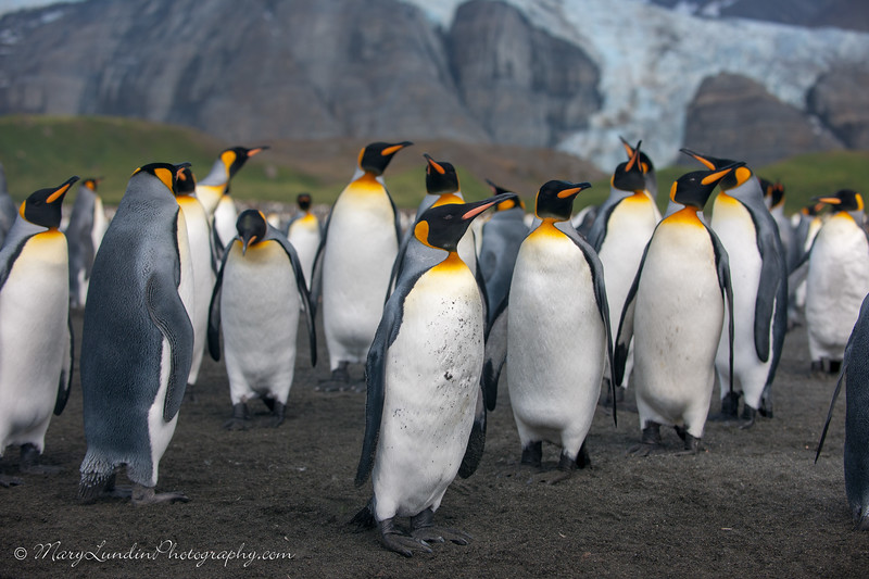 Antarctic-99
