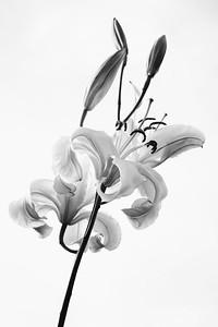 Florals 2018
