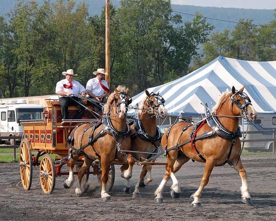 Grange Fair  2007 - Draft Horses -- Unicorn