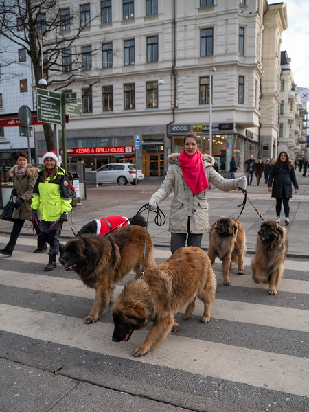 Photowalk Göteborg 2018-12-15