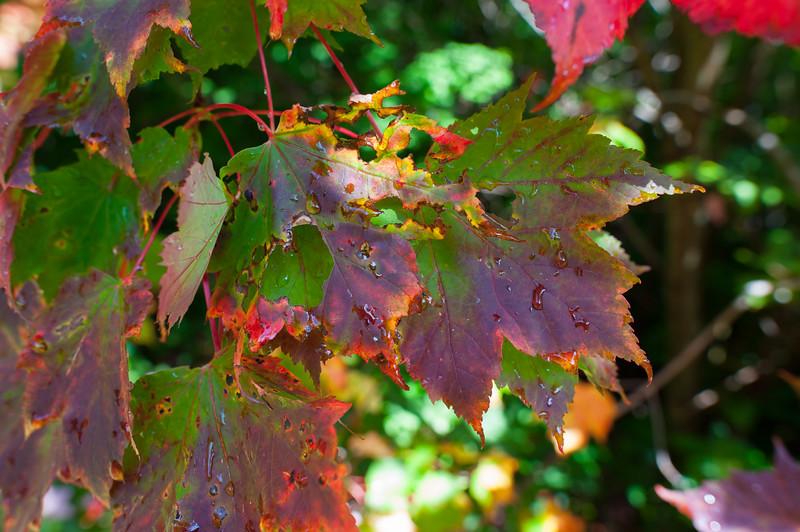 Colorful Smokey Leaves