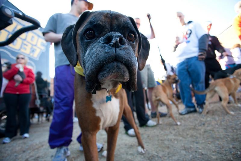 Dogswalk_RLoken_004_3014