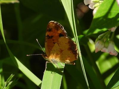 20190707 PFN Butterflies