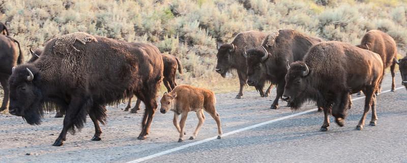 Yellowstone-8844.jpg