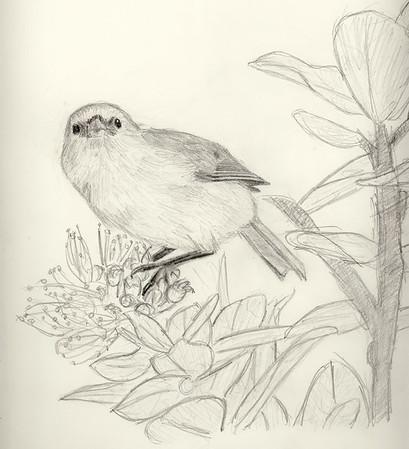 Maddie Bird Drawings