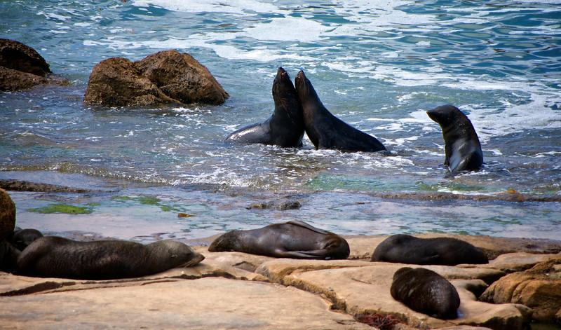 Seals at Shag Point
