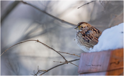 Winter Backyard Birds January and February 2021