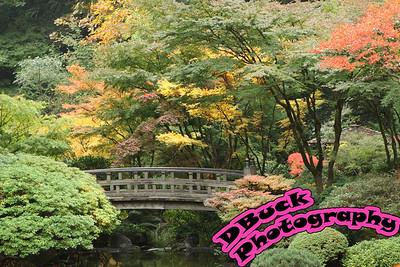 10-20-09 Japanese Garden