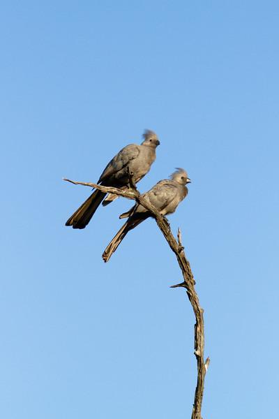 Go-Go Away-Away Bird-Bird