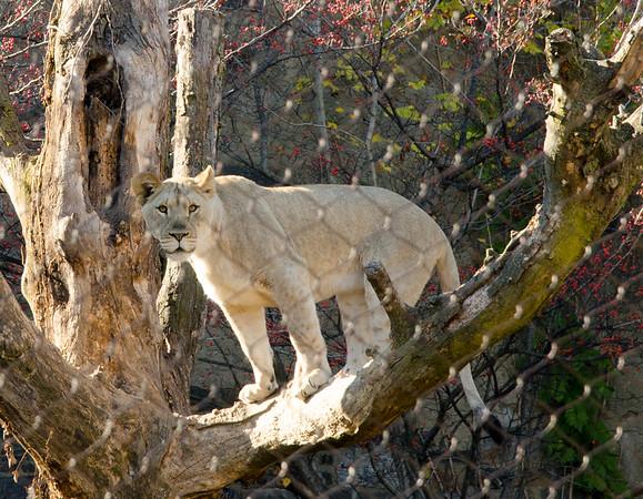 Quick Zoo Visit - Nov 2015