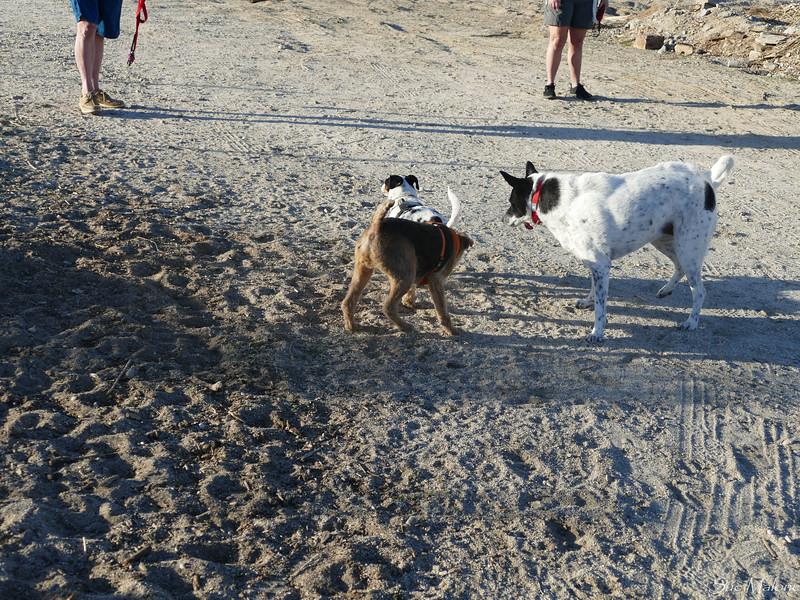 dog walk in the desert (12 of 13).jpg