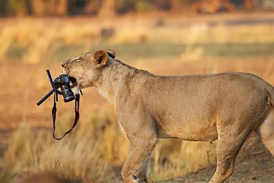 Cute animals around cameras