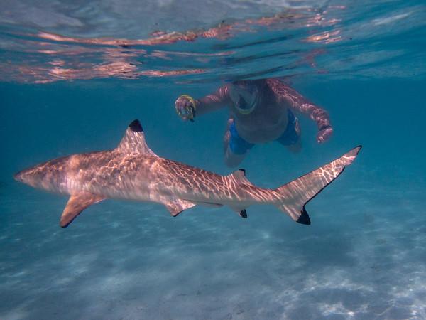 Bora Bora lagoon, swimming with sharks and stingrays - June, 2021