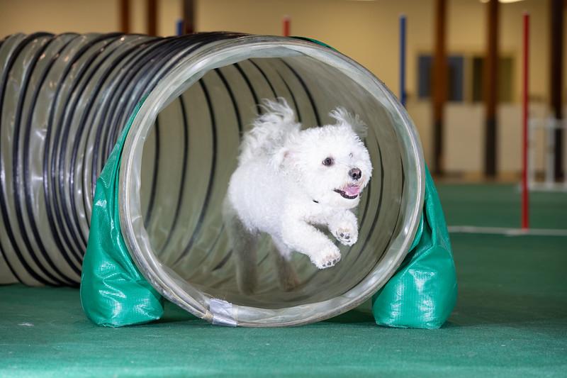 SPCA_Agility-61.jpg