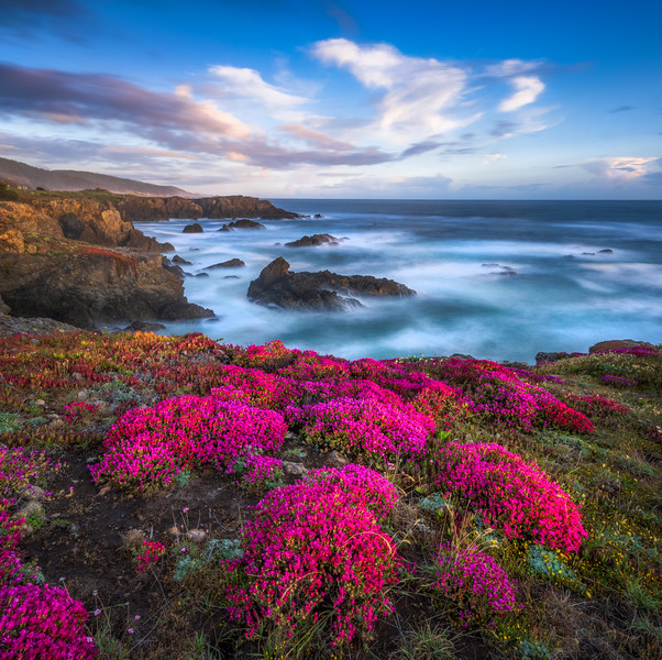 Bihler Point & Spring Bloom, Study 6, Sea Ranch, California