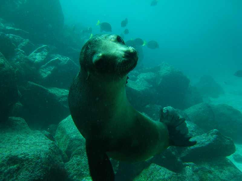 Diving in the Galapagos (303 of 392)