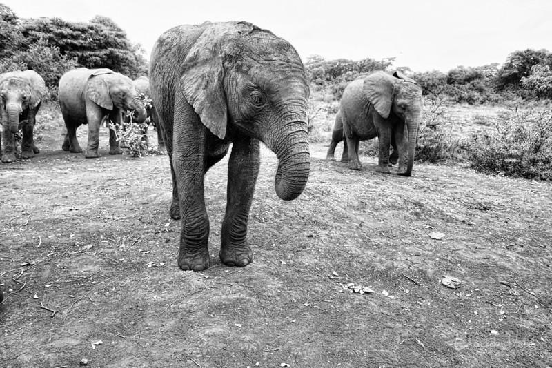 Aug312013_nairobi_blixen_elephant_2449.jpg