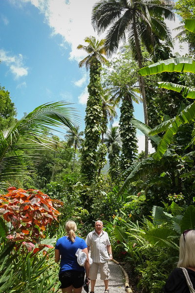 12May_St Lucia-fuji_150.jpg