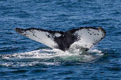 Whale Watch 08-17-18