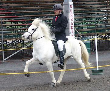 Icelandic Horse Breeding Evaluations