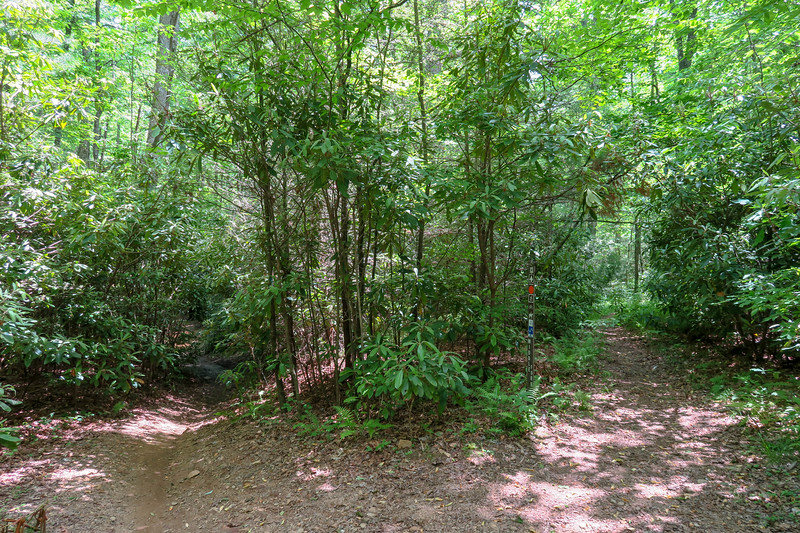 Middle Fork-Fletcher Creek Trail Junction -- 2,610'