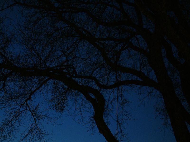 Falmouth - Creepy trees.jpg