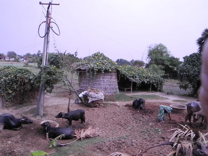 india&nepal2011 269.jpg