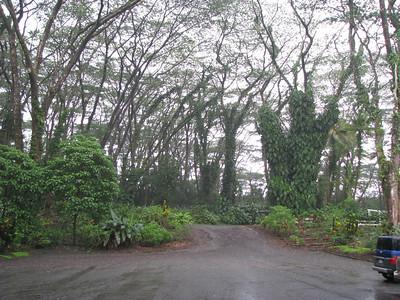 Sunday at Lava Tree Park Day Eight