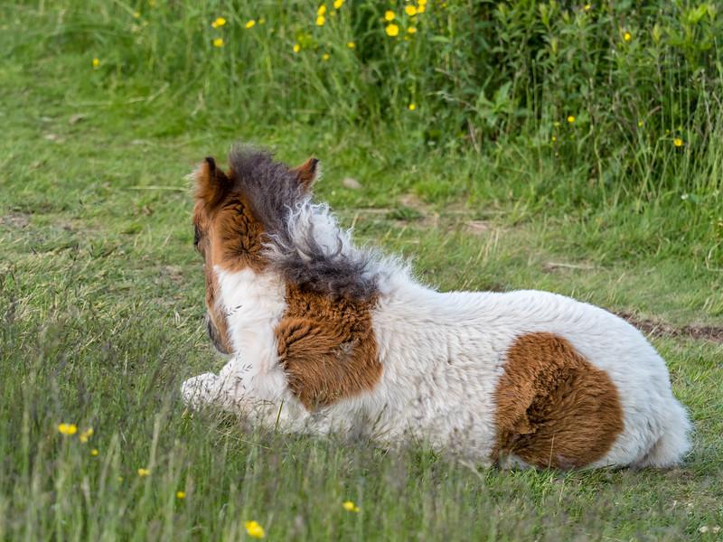 269 Jun 15 2019 Grayson Highland Foal xxx-1.jpg