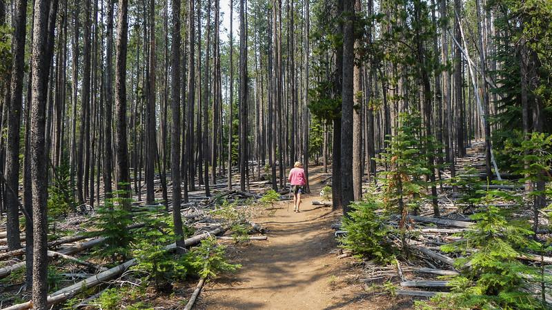 return trail on the west side of Paulina Creek
