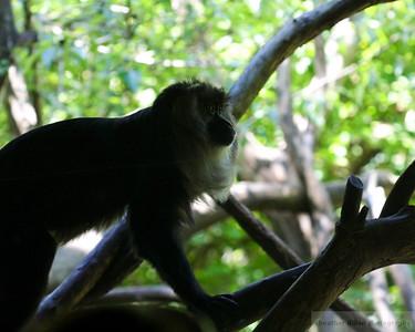 2009-05 Zoo