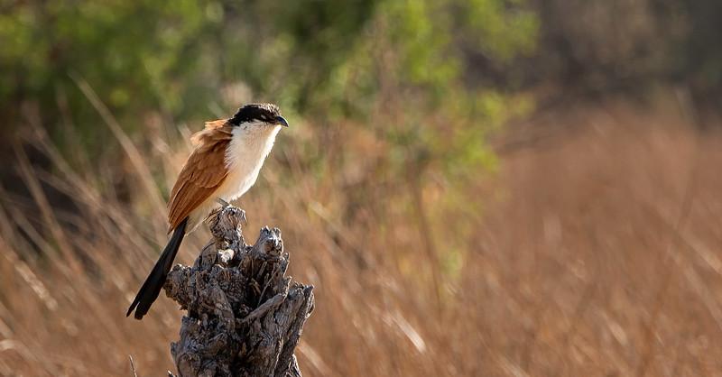 2014-08Aug-Okavango Masters-21-Edit.jpg