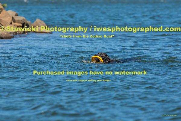 WSB - Event Site. Monday 7.29.19 12pm-2:30pm. 595 images