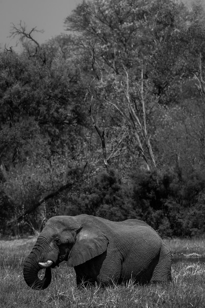 Botswana_June_2017 (2584 of 6179).jpg