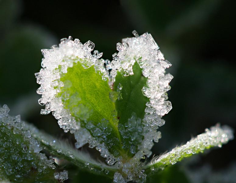3839-40 Frosty Heart.jpg
