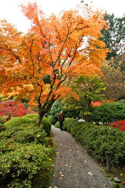 Portland Japanese Garden  11-11-11  3552.jpg